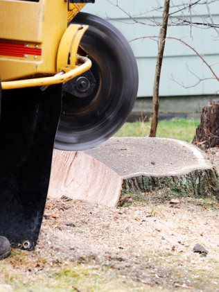 stump grinding in Dartmouth, MA