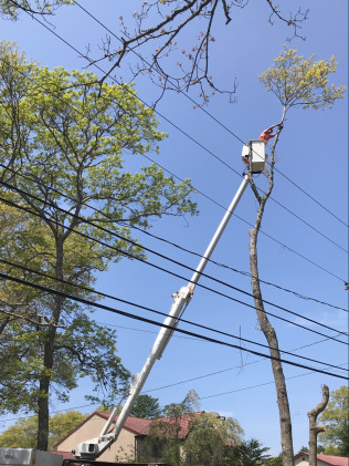 tree service in Dartmouth, MA